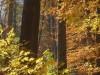 Natur Pur in Rüdersdorf bei Berlin