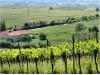 Pfälzer Weinbaugebiet