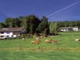 Bauernhof Fohnhof / Ferienwohnung in Üxheim