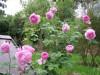 Im Terrassengarten